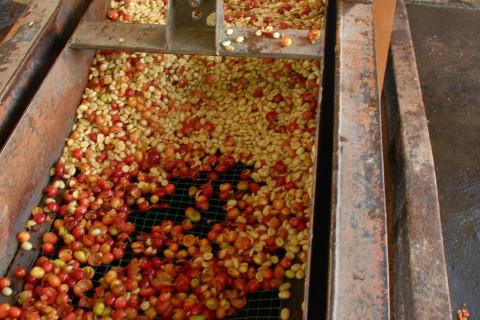 Espresso: Ethiopia Guji